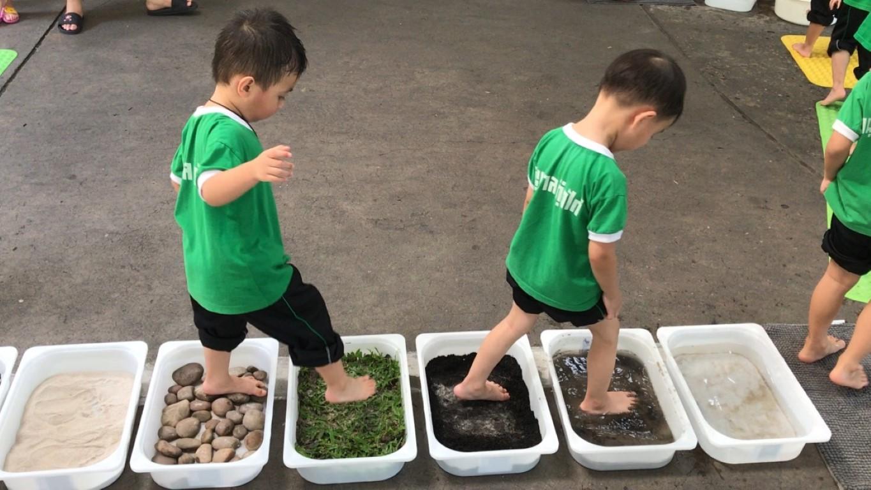 Sensory Play หน่วยธรรมชาติของสัตว์และพืช