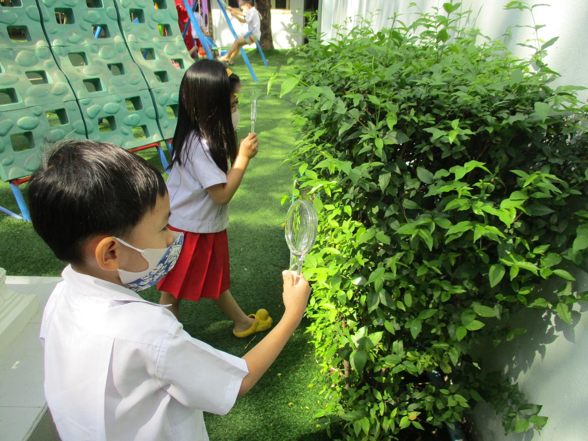 ผลงานเด็กหน่วย ธรรมชาติรอบตัว ชั้นอนุบาลปีที่ 2