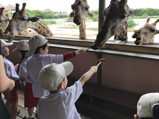 School Field Trip to Safari World
