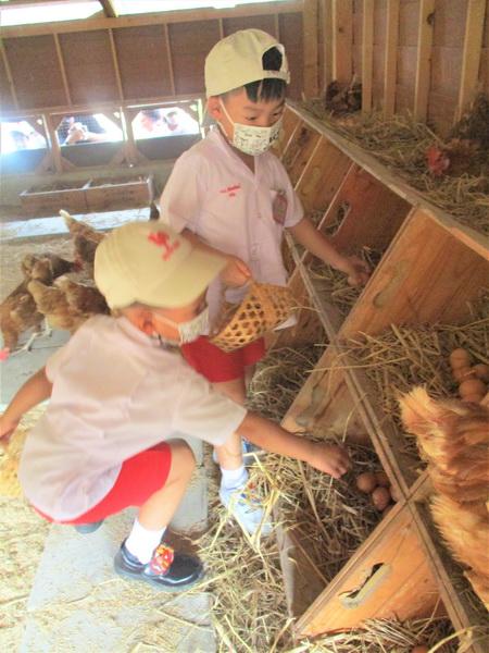 เรื่องไข่ ระยะที่ 2 สัปดาห์ที่ 5