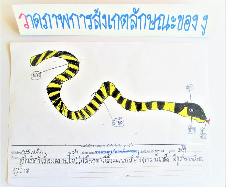 Snake, Stage 2 Week 2